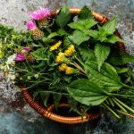 """7 Healthy, Nutritious """"Weeds"""" You Could Eat"""