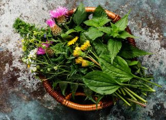 "7 Healthy, Nutritious ""Weeds"" You Could Eat"