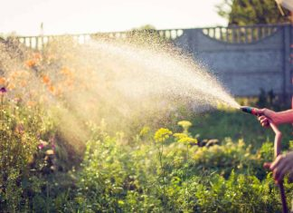 The Danger That May Be Lurking In Your Garden