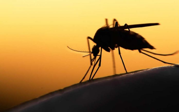 This Blood Type Makes You More Prone to Mosquito Bites
