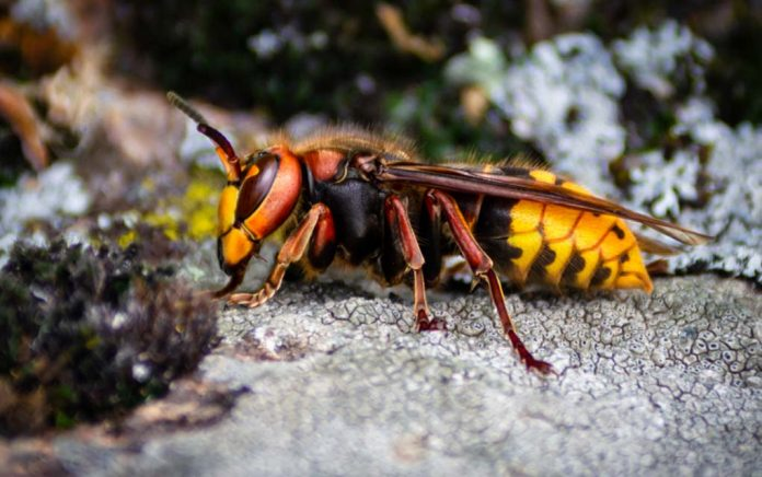 Forget Murder Hornets: These 5 Dangerous Bugs Are More Common