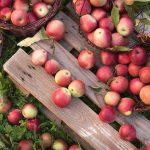5 Surprising Health Benefits of Apples